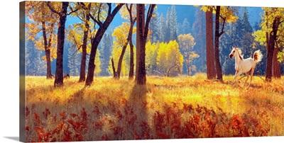 California, Yosemite Park