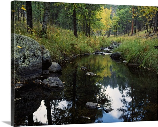 Calm water of Grace Coolidge Creek, Custer State Park, South Dakota