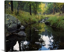Calm water of Grace Coolidge Creek, Custer State Park, South Dakota