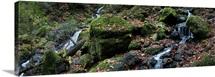 Cataract Falls Hiking Trail, Fairfax, Marin County, California