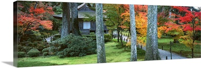 Cedar trees and Maple trees in front of a temple, Sanzen-in Temple, Kyoto City, Kyoto Prefecture, Japan