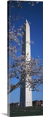 Cherry Blossom in front of an obelisk Washington Monument Washington DC