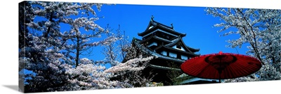 Cherry Blossom Matsue Castle Japan