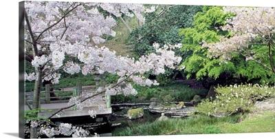 Cherry Trees Strybing Arboretum San Francisco CA