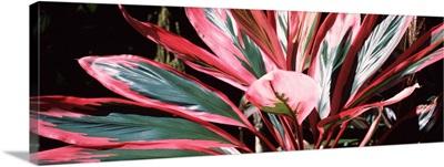 Close-up of a flower, Hilo Tropical Gardens, Hilo, Hawaii