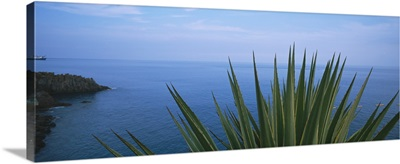Close-up of a plant with sea in the background, Lido, Funchal, Madeira, Portugal