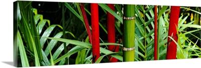 Close-up of bamboo trees, Hawaii