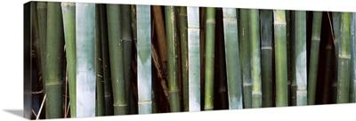 Close up of bamboos