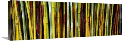 Close up of bamboos Kanapaha Botanical Gardens Gainesville Florida