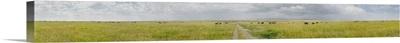 Clouds over a landscape, Savannah, Masai Mara National Reserve, South Africa