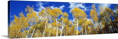 Colorado, Uncompahgre Nationa Forest