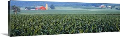 Corn field Kishacoquillas Valley PA