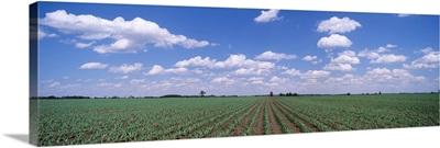 Corn Field Marion County IL