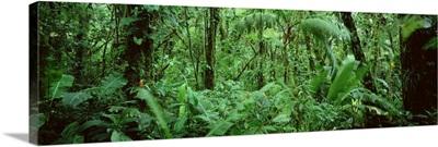 Costa Rica, Monteverde Cloud Forest Reserve