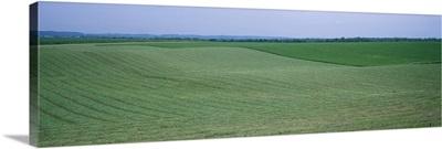 Crop on a rolling landscape, Iowa County, Iowa