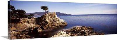 Cypress tree at the coast, The Lone Cypress, 17 mile Drive, Carmel, California,