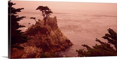 Cypress Tree Pacific Coast CA