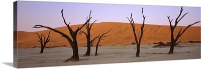 Dead trees in a desert at sunrise Dead Vlei Sossusvlei Namib Naukluft National Park Namibia