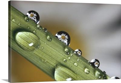 Dew drops on a stem