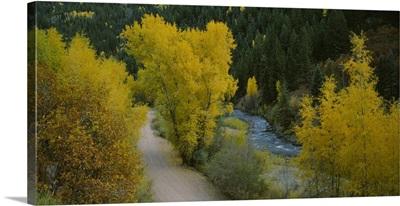 Dirt road along a river, San Miguel River, Colorado
