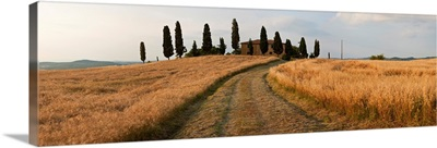 Dirt road passing through a field, Val d'Orcia, Tuscany, Italy