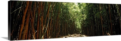 Dirt road passing through a forest, Haleakala National Park, Maui, Hawaii