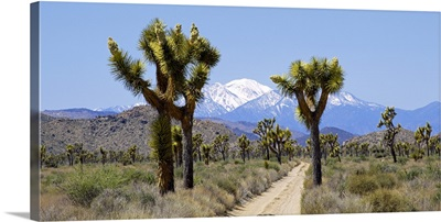 Dirt road passing through a landscape, Queen Valley, Joshua Tree National Monument, California