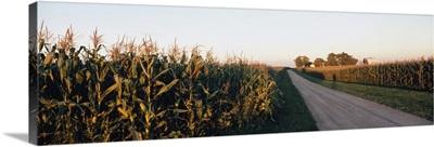Dirt road passing through fields, Illinois