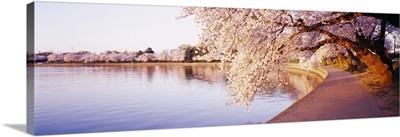 District of Columbia, Washington DC, Tidal Basin