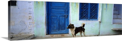 Dog In Front Of A House, Rajasthan, India