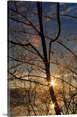 Double sunstar behind frosted tree branches, Maryland