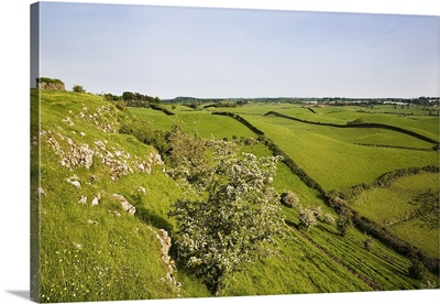 Drumlin Landscape, From Roche Castle, County Louth, Ireland