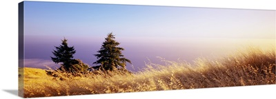Dry grass on the mountain with ocean in the background, Pacific Ocean, Mt Tamalpais, Marin County, California