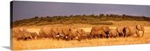 Elephant Herd Maasai Mara Kenya