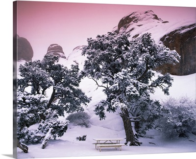 Empty bench under snow covered trees, Arches National Park, Utah,