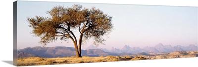Ethiopia, Debre Damo, tree