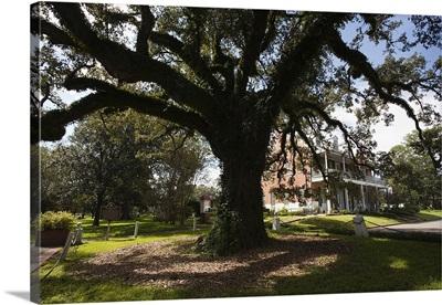 Evangeline oak tree in a garden, St. Martinville, St. Martin Parish, Louisiana
