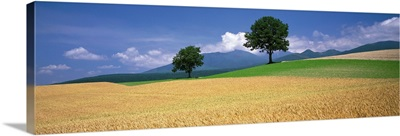 Farm Fields Hokkaido Japan