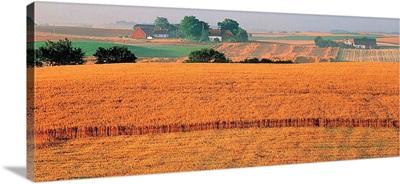 Farm Scene Sweden