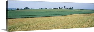 Farm silos in an oat field, Iowa