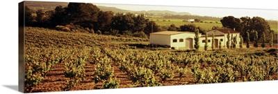 Farmhouses in a vineyard, Penedes, Catalonia, Spain