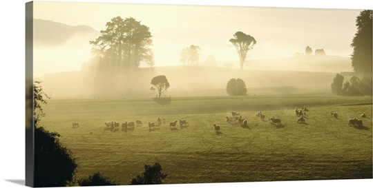 Farmland & Sheep Southland New Zealand Wall Art, Canvas Prints ...