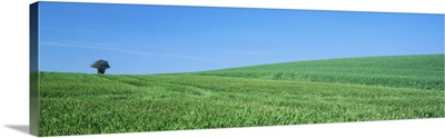 Field Hertfordshire England