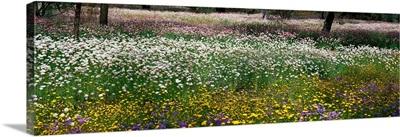 Field of Flowers Kings Park Perth Australia