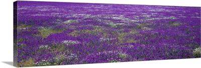 Field of Flowers Planicies Portugal