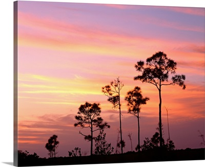 Florida, Everglades National Park, Mahogany Hammock, Tree in the sunset