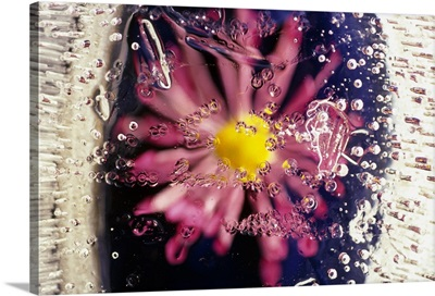 Flower blossom under ice, Oregon, united states,