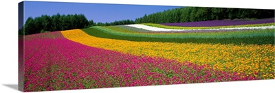 Flower Farm Hokkaido Japan