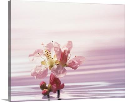 Flower standing in pink water