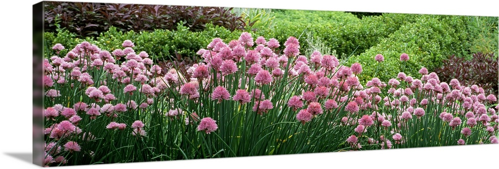 Flowering Plants In A Botanical Garden Red Butte Garden And